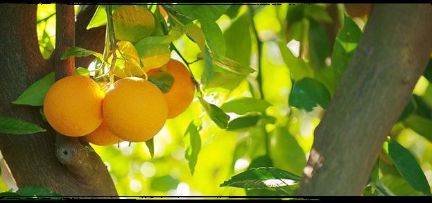 Orange-Valencia